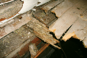 Dry Rot Essex | Dry Rot Treatment Essex